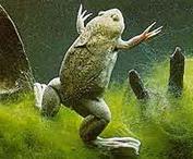 frog1_med