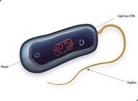 bacteria_med