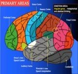 brain_plasticity_med