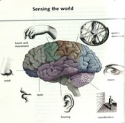 brainfunction_med